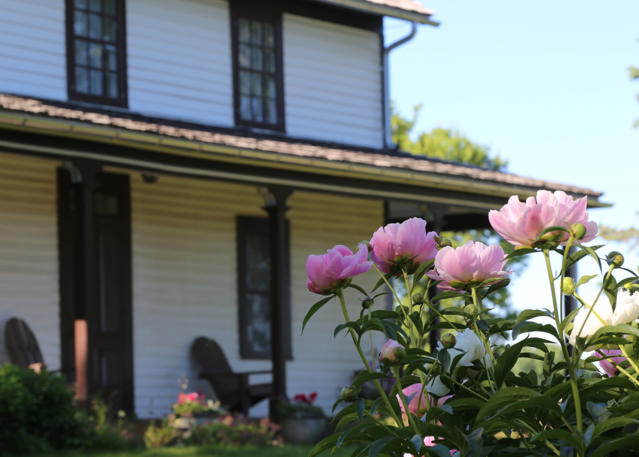 Photo of Peonies with Gibbs Farmhouse in the background